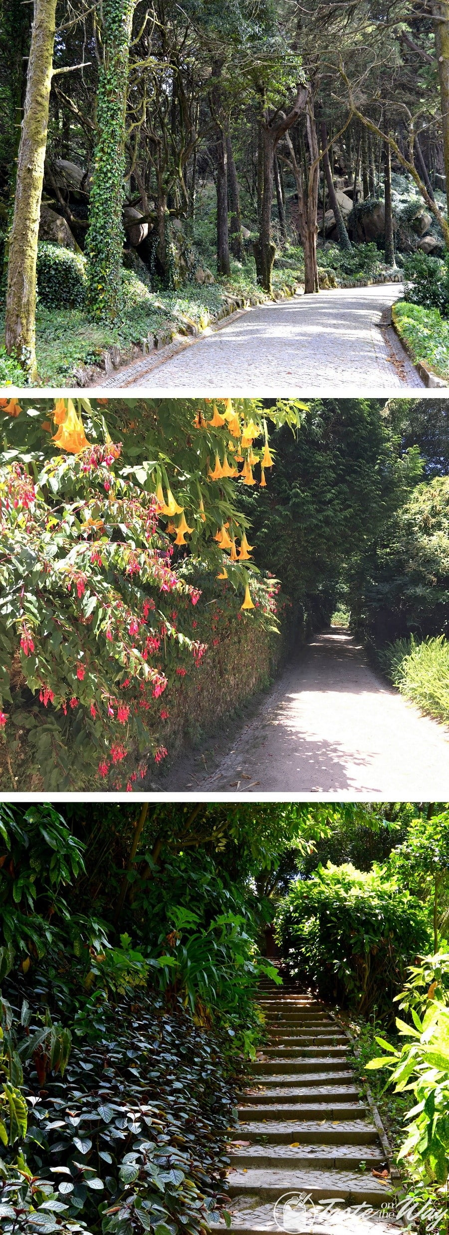 One of the top things to do on a #daytrip to #Sintra, #Portugal is to take a relaxing walk in the lush parks and gardens. Check out for more! #travel #photography @tasteontheway