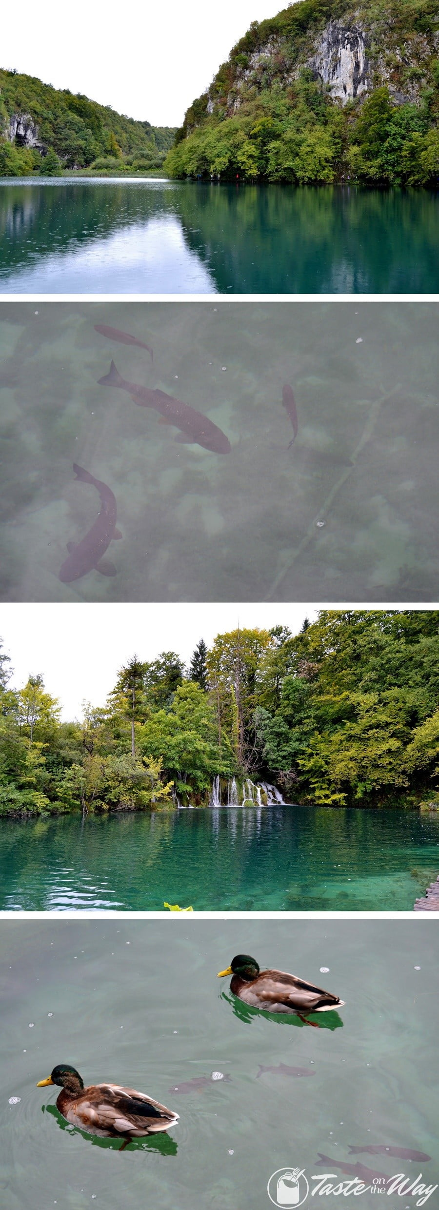 One of the top #tips visiting #Plitvice Lakes National Park in #Croatia is to look out for the wild life. Check out for more! #travel #photography @tasteontheway