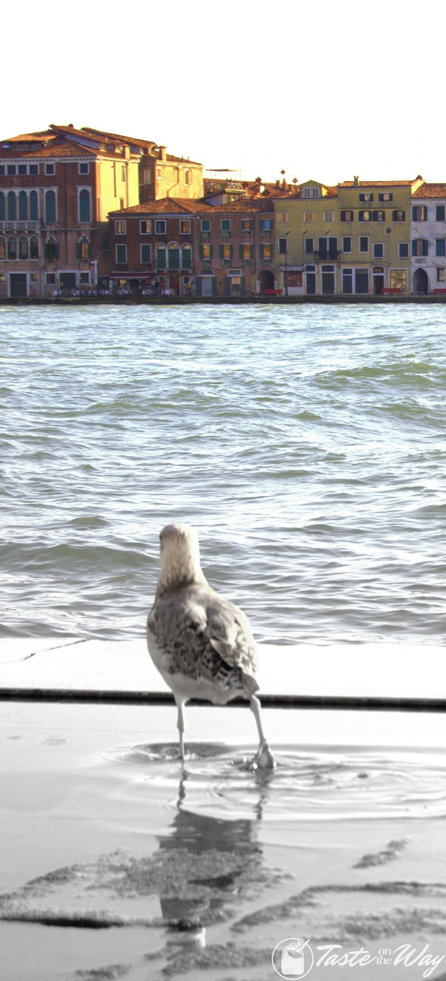 One of the top 10 fun #ThingsToDo in #Venice, #Italy is to observe the local critters. Check out for more! #travel #photography @tasteontheway