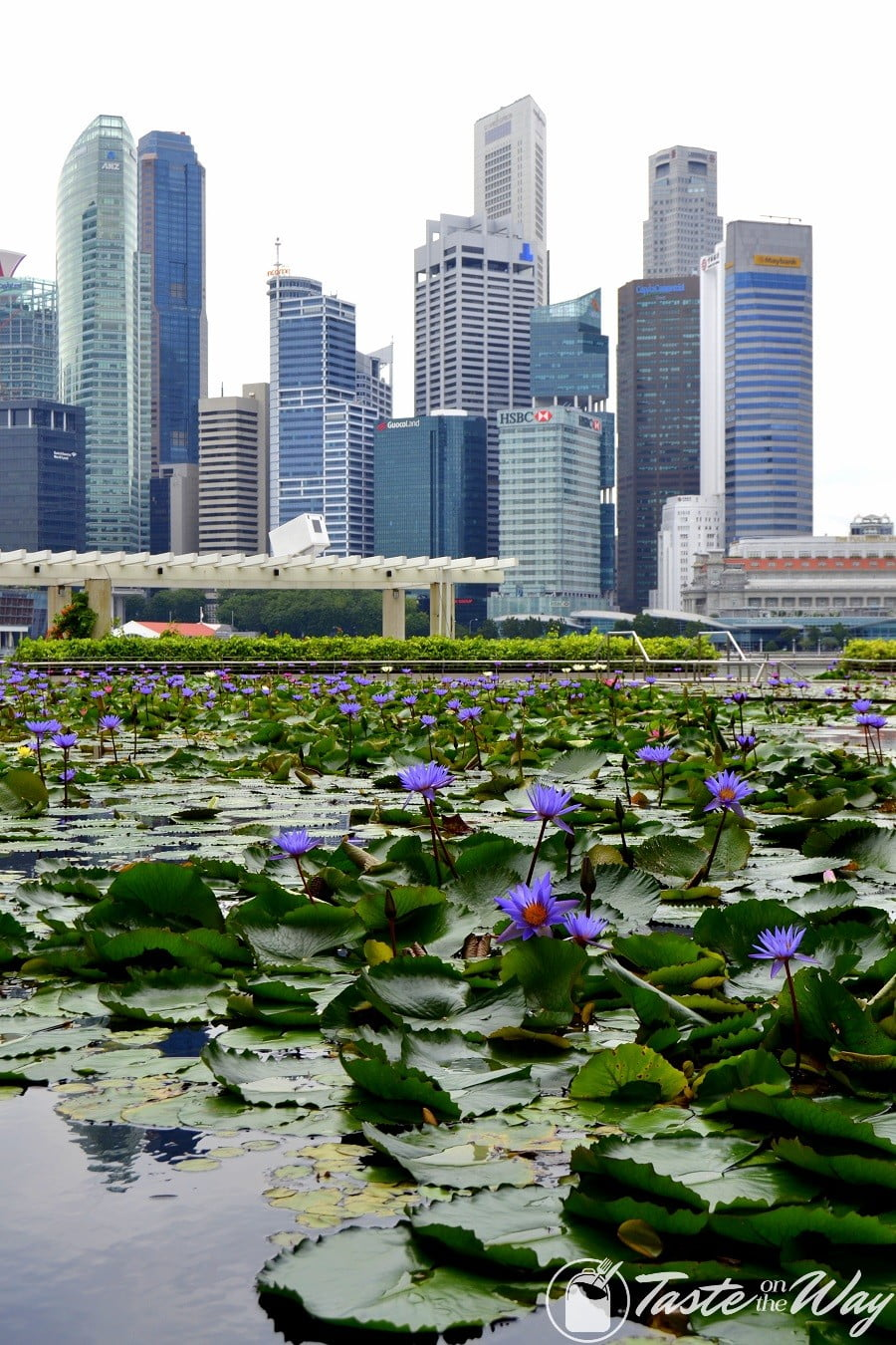 Top 10 Best Things to Do in Singapore - Visiting the Marina Bay is just one of the top #thingstodo in #Singapore. Check out for more! #travel #photography @tasteontheway