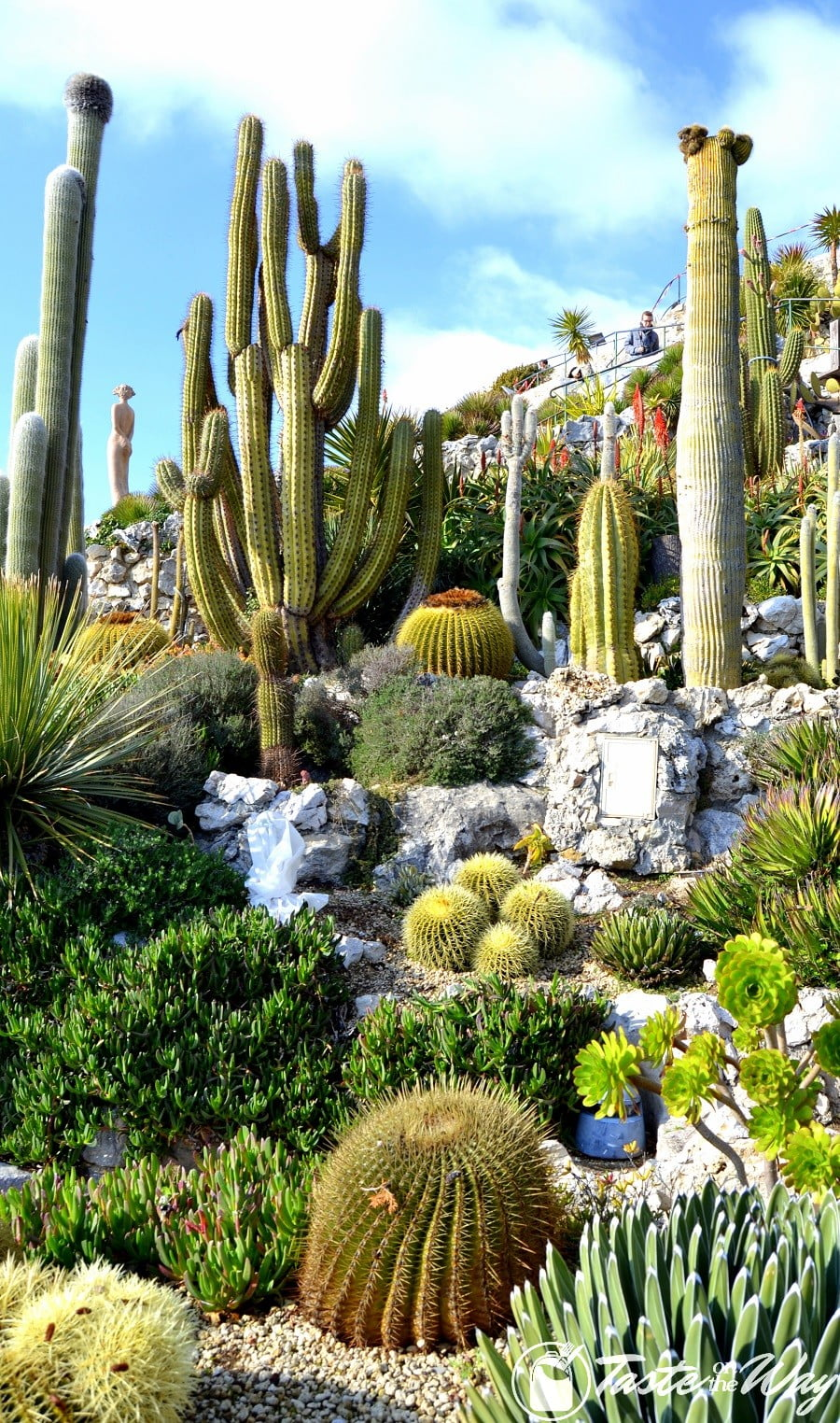Things to Do in Eze Village, France - cacti in the botanic garden of Eze #travel #photography #France