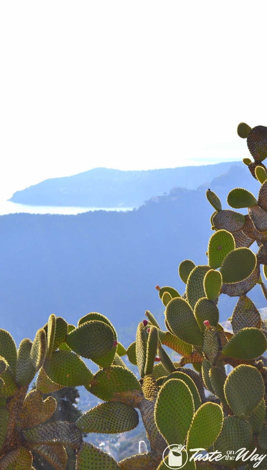 Things to Do in Eze Village, France - cacti and the mountains #travel #photography #France