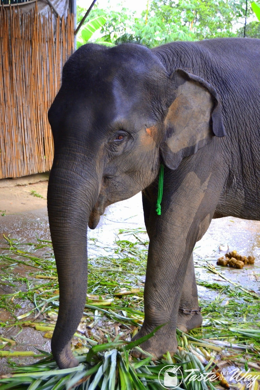 Baby elephant in Phuket #Thailand #travel